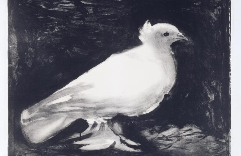 Dove-1949-by-Pablo-Picasso-1881-1973